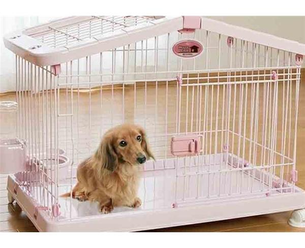 天津训犬公司告诉您训犬的意义到底是什么?